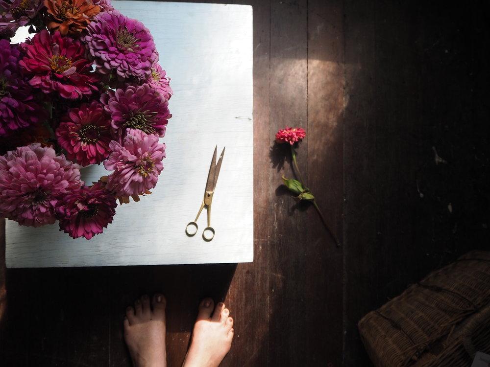 Ellie Beck petalplum zinnia shadows.JPG