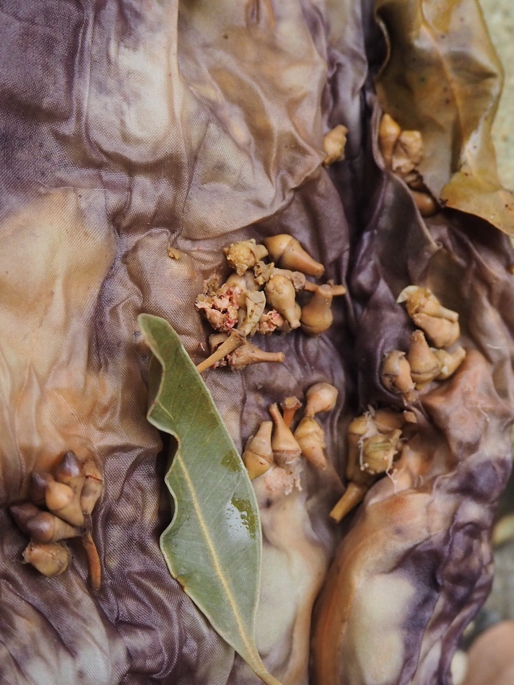 Ellie Beck_Natural Dye with Eucalyptus leaves How to DyeAF7124B2-2C92-4DE9-83D7-22A64C541D1B.JPG