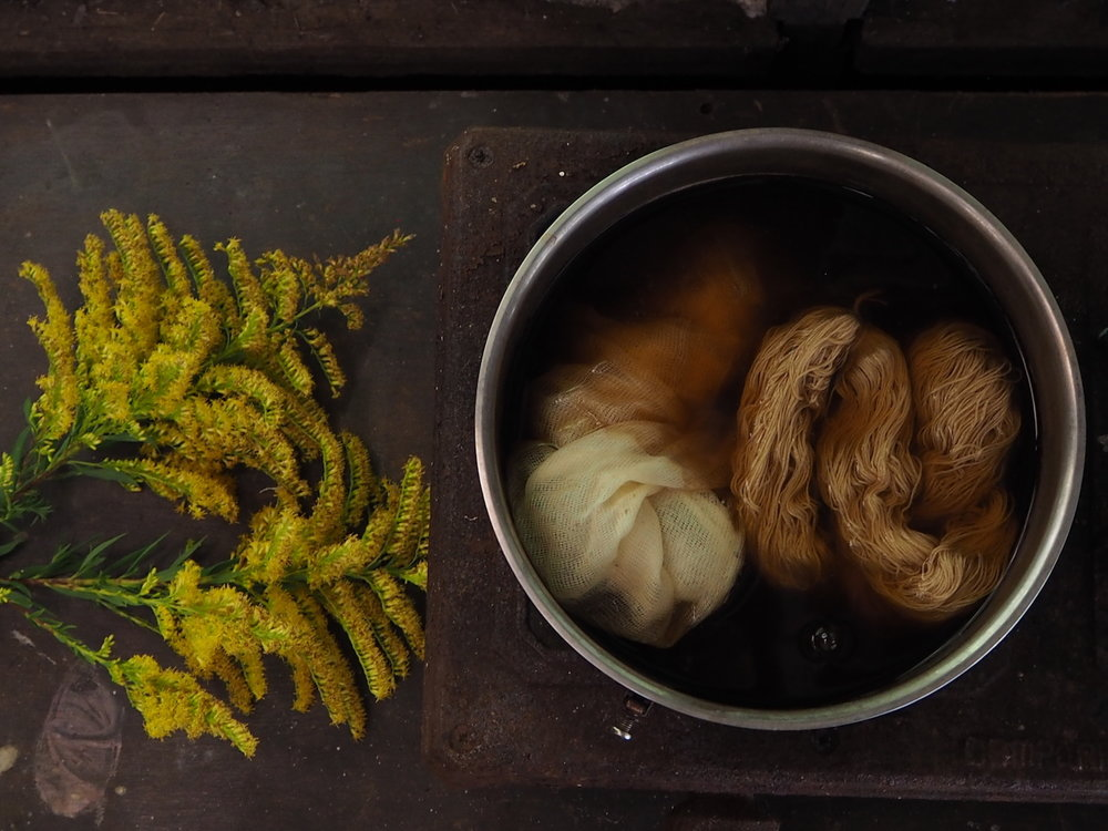 Ellie Beck - Botanical dye pot - golden rod flowers .jpeg