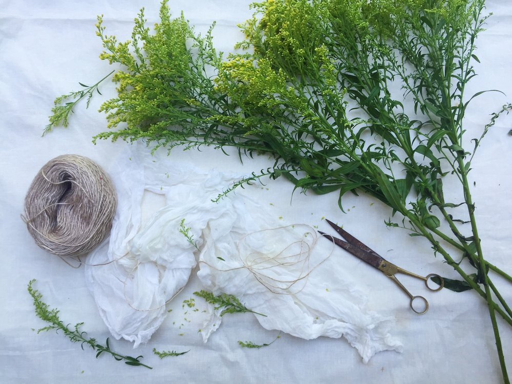 Ellie Beck Petalplum blog natural dyeing with golden rod flowers styled image with scissors and string.JPG