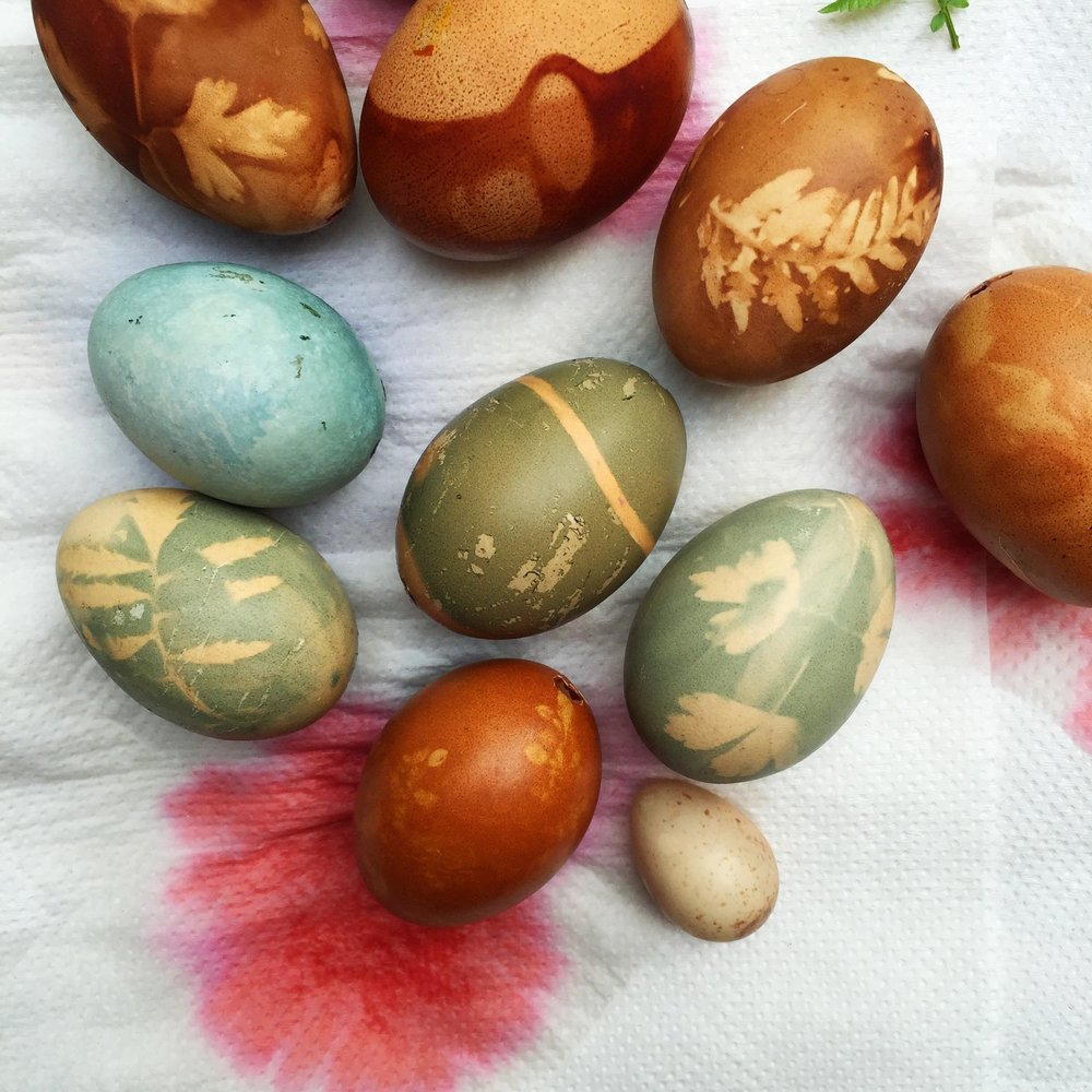 Naturally dyed easter eggs tutorial by Ellie Beck Petalplum