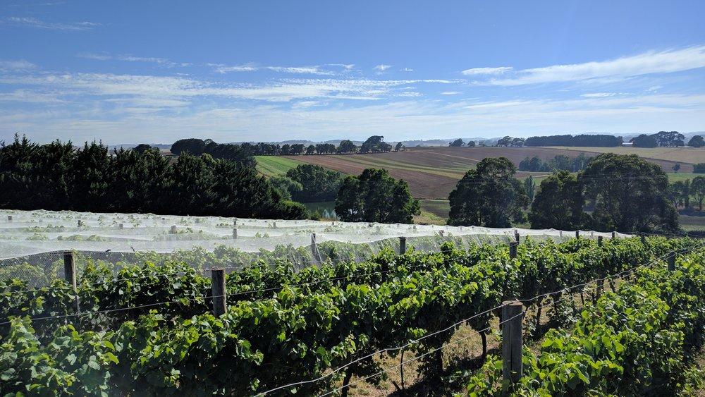 Tilson Hill Vineyard