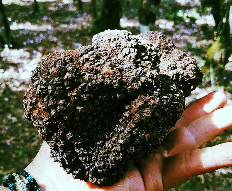 Large Grecian Peloponnese Truffle and Hand.jpg