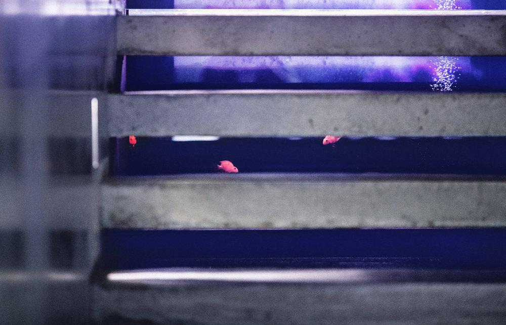 樓梯,水族缸,清水模
