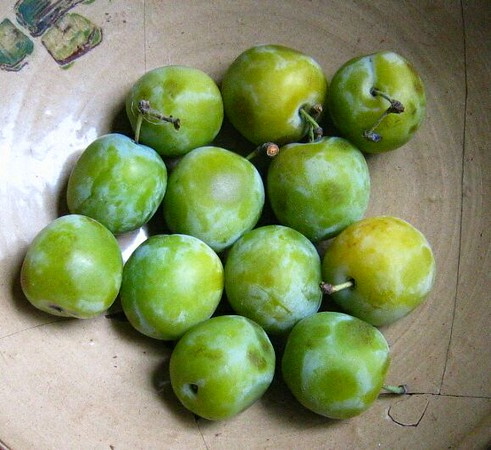 sour-plum-M.jpg