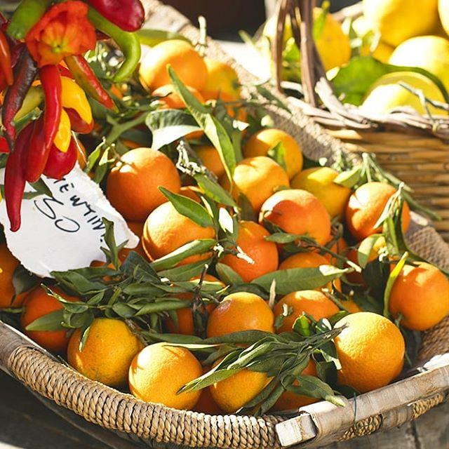 End of summer sunshine oranges! 🍊🍊🍊