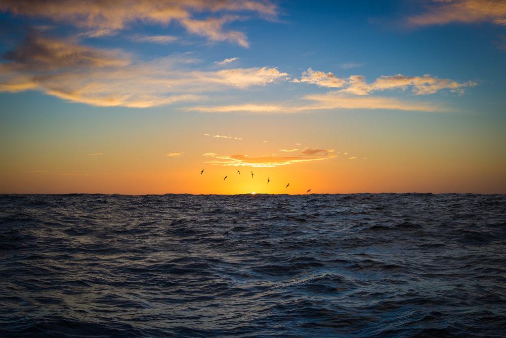 Brad Leue Southern Ocean