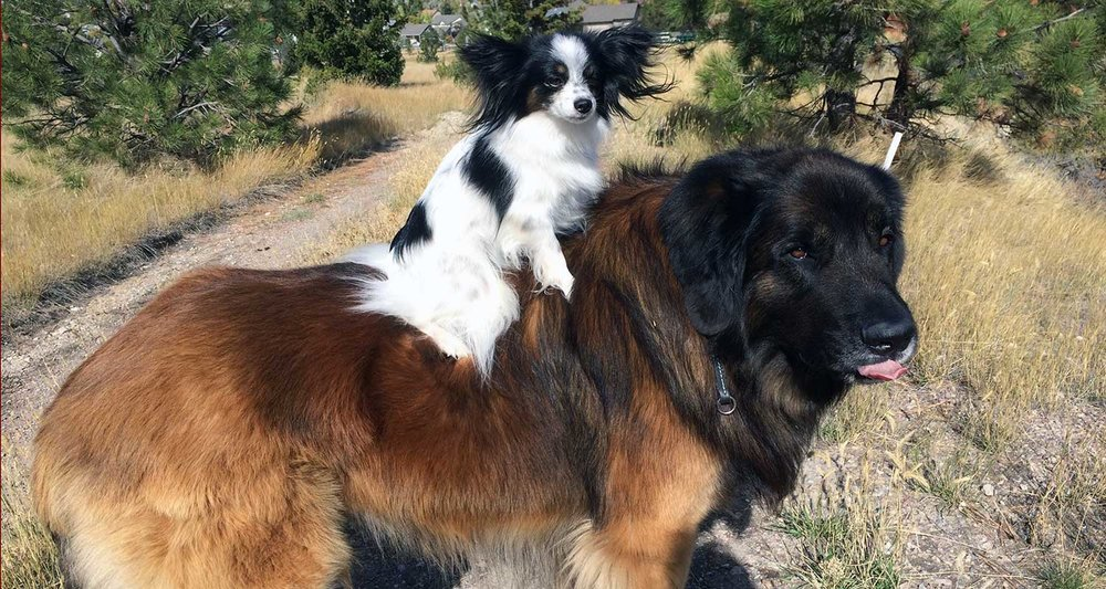 papillon-and-friend-header.jpg