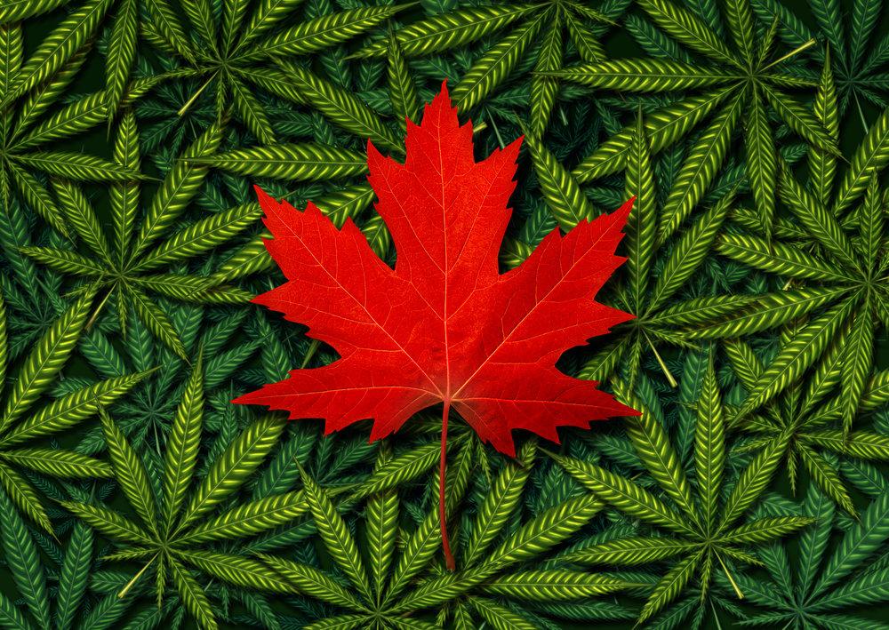 Canada Leaf In Weed .jpg