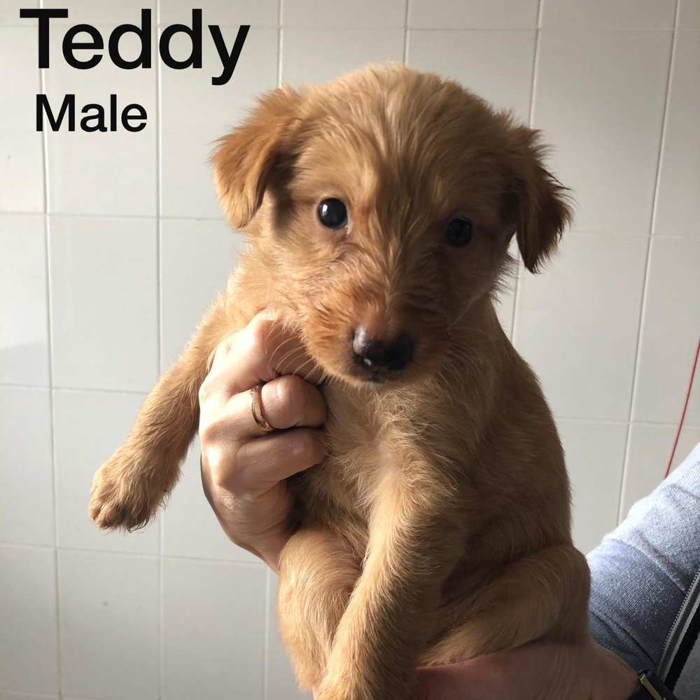 Teddy 08.01.19 (reserved)