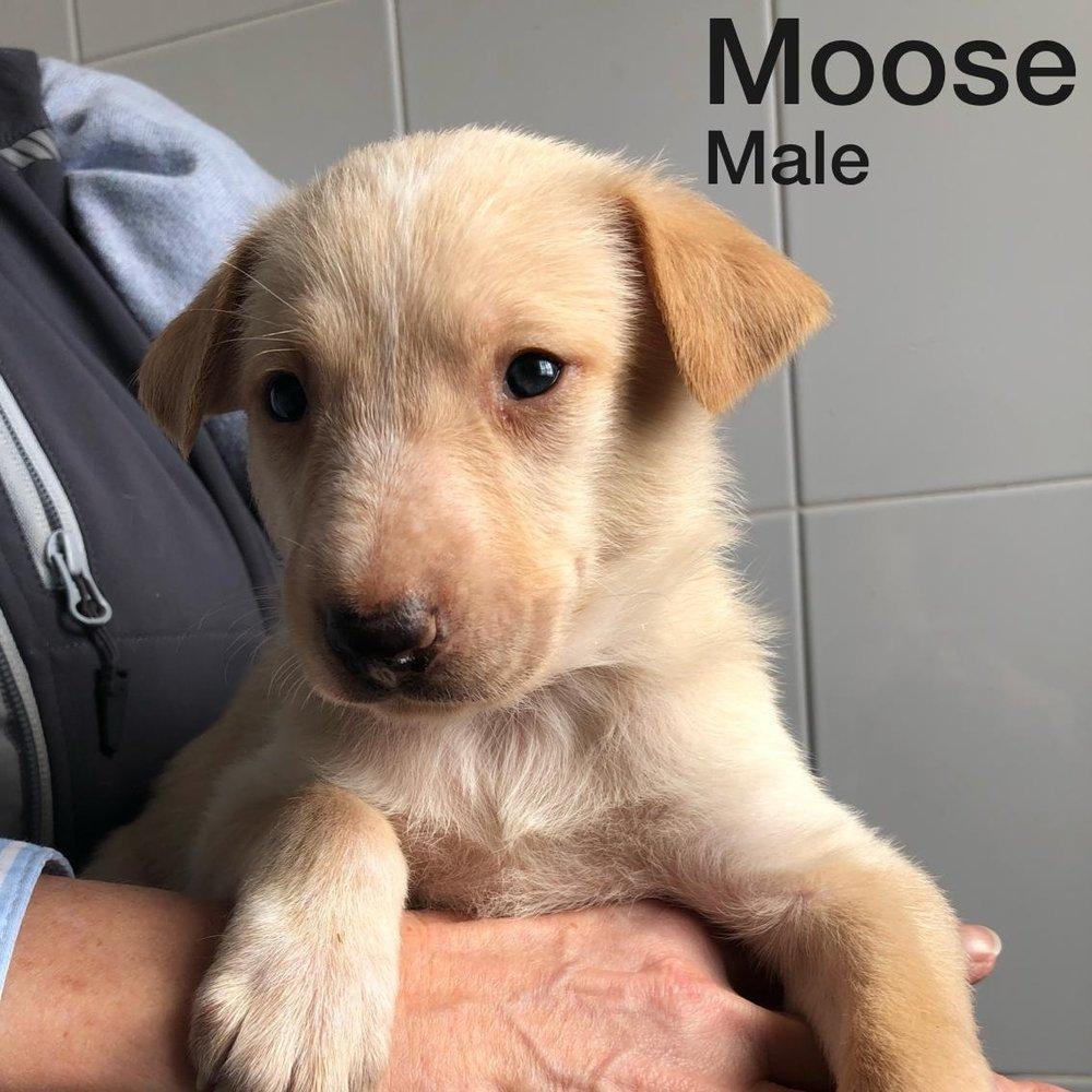 Moose 08.01.19