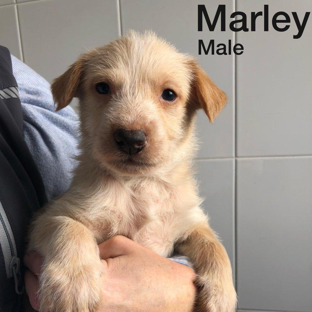 Marley 08.01.19