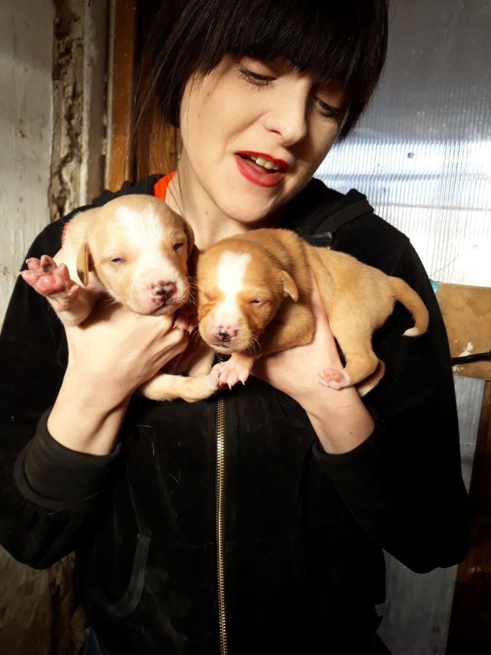 Puppies opening their eyes 17/2/19 (with volunteer Sandra)