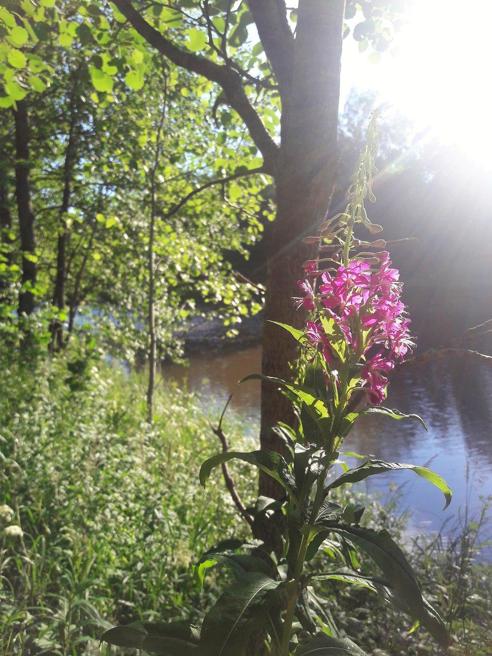 Vantaanjoen varrella