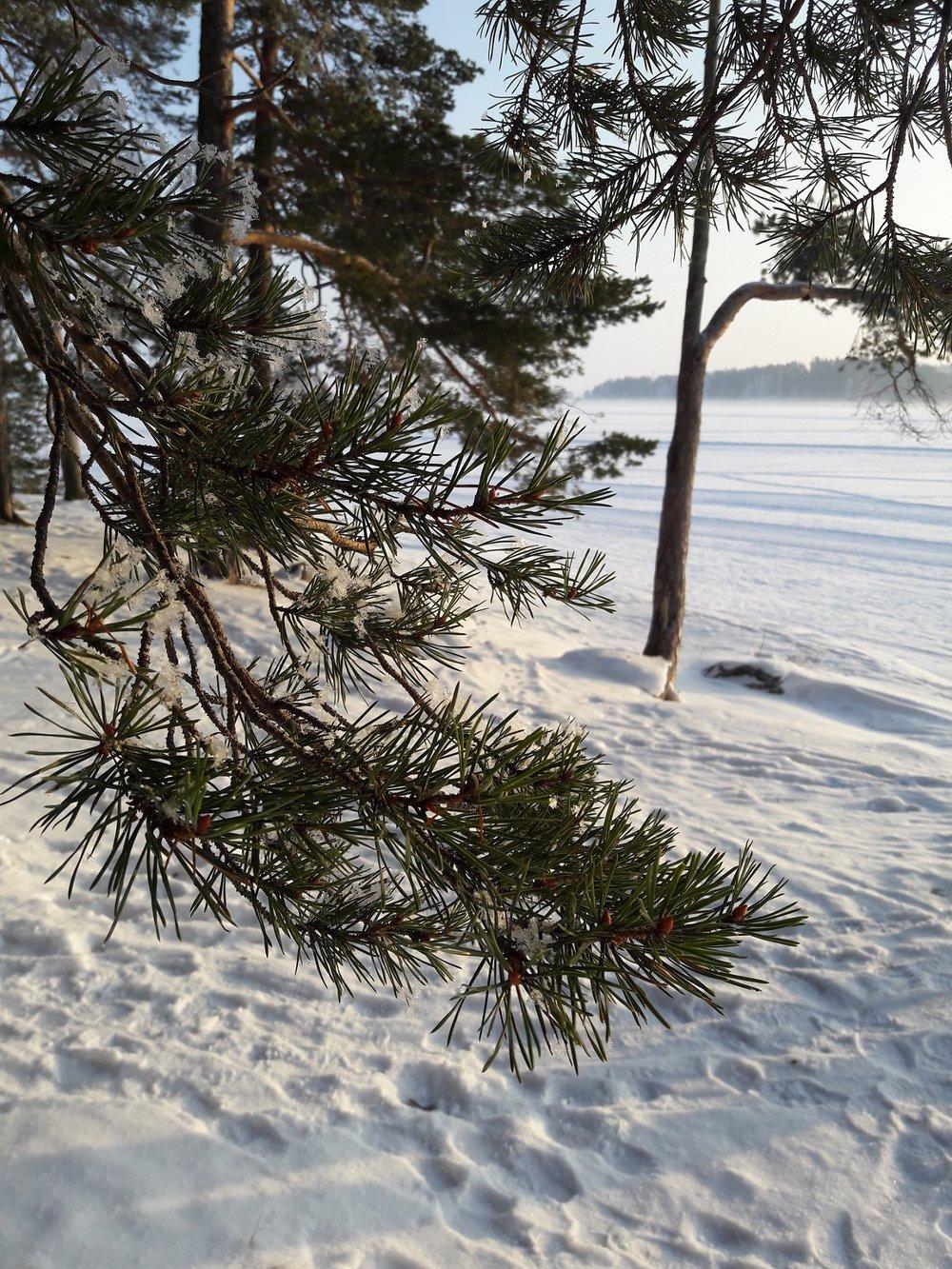 Kuopiossa