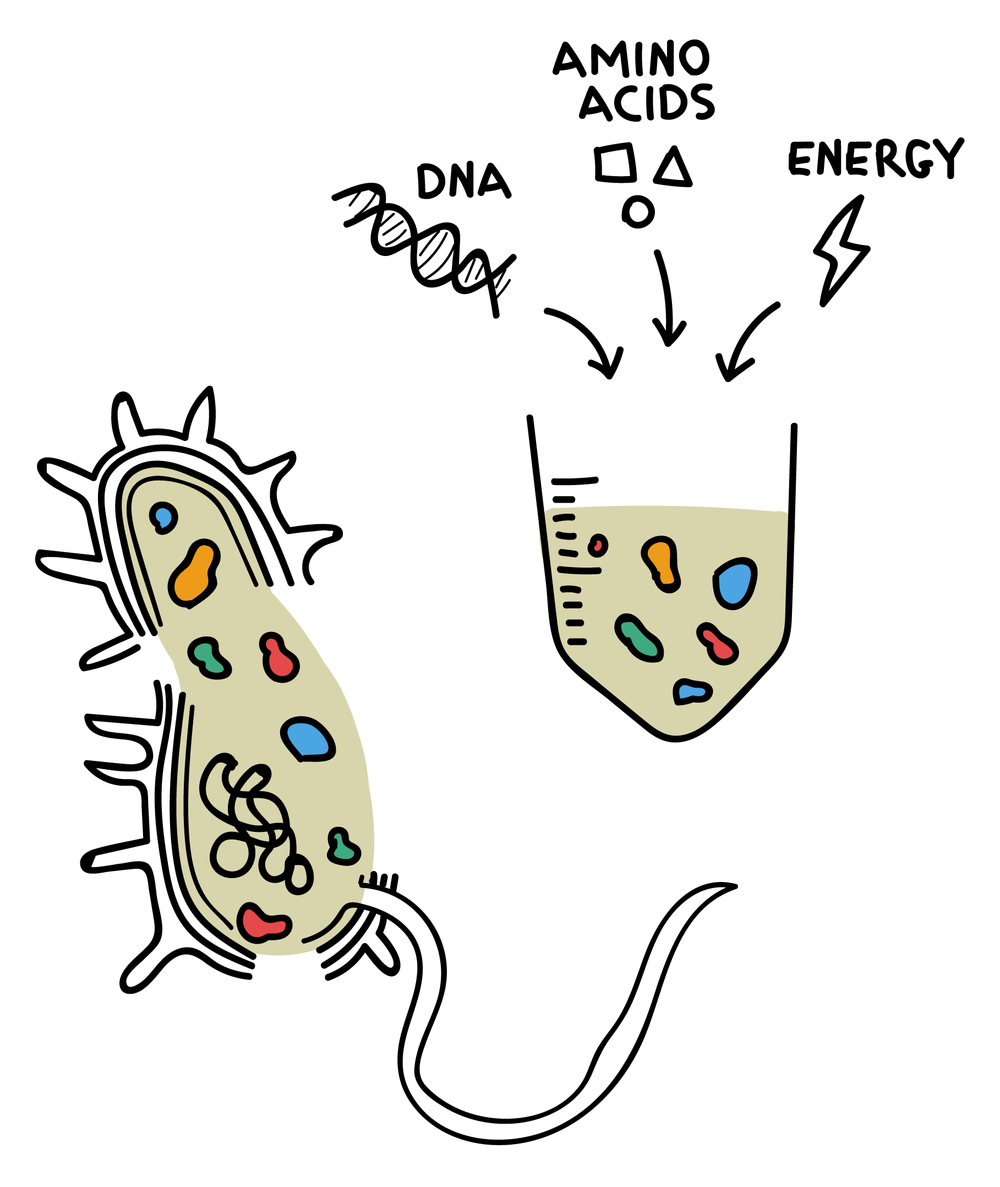 1 Cell-free Biotechnologies.png