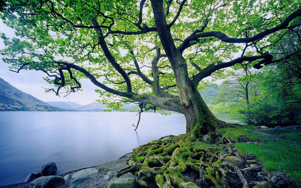 Why Lifetree? - Our name comes from a Bible verse.In Psalm 1, King David of Israel wrote that peoplewho know God personally are like TREES,planted by streams of water, bearing FRUIT each season.Their leaves never wither, and they prosper in all they do.We see a community filled with people who are vibrant andgrowing because of a relationship ROOTED in faith in a God who loves us.
