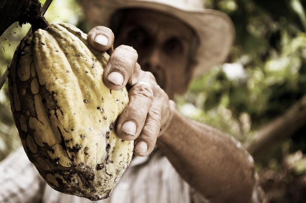 cocoa-man-colombia-peasant-50707.jpeg