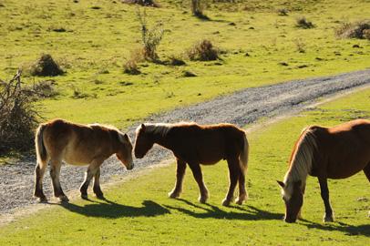 Wilde Pferde in den Pyrenäen