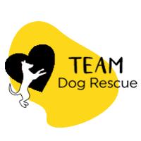 TEAM dog-yellow logo.png