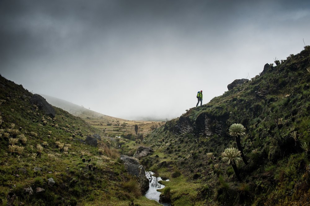 Miniature valley on the Colombian Parámo inhabited with some of the most unique plant life on earth.