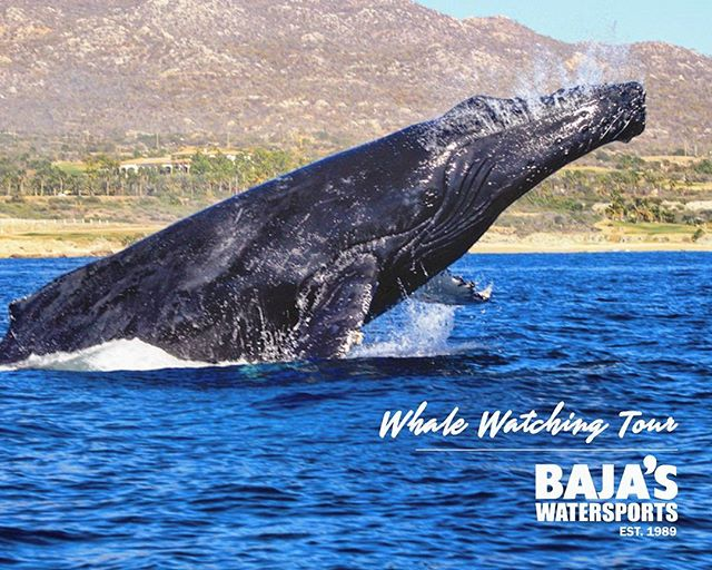 #whalewatching still on! Join us and take great shots of these leaping artists!