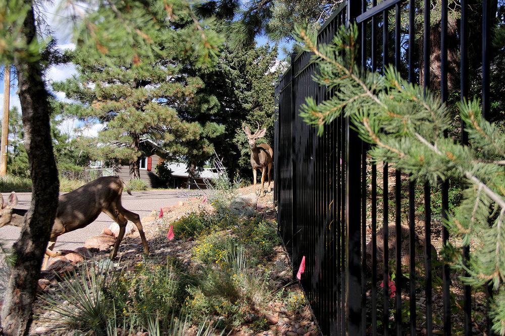 Colorado Springs Custom Iron Fence