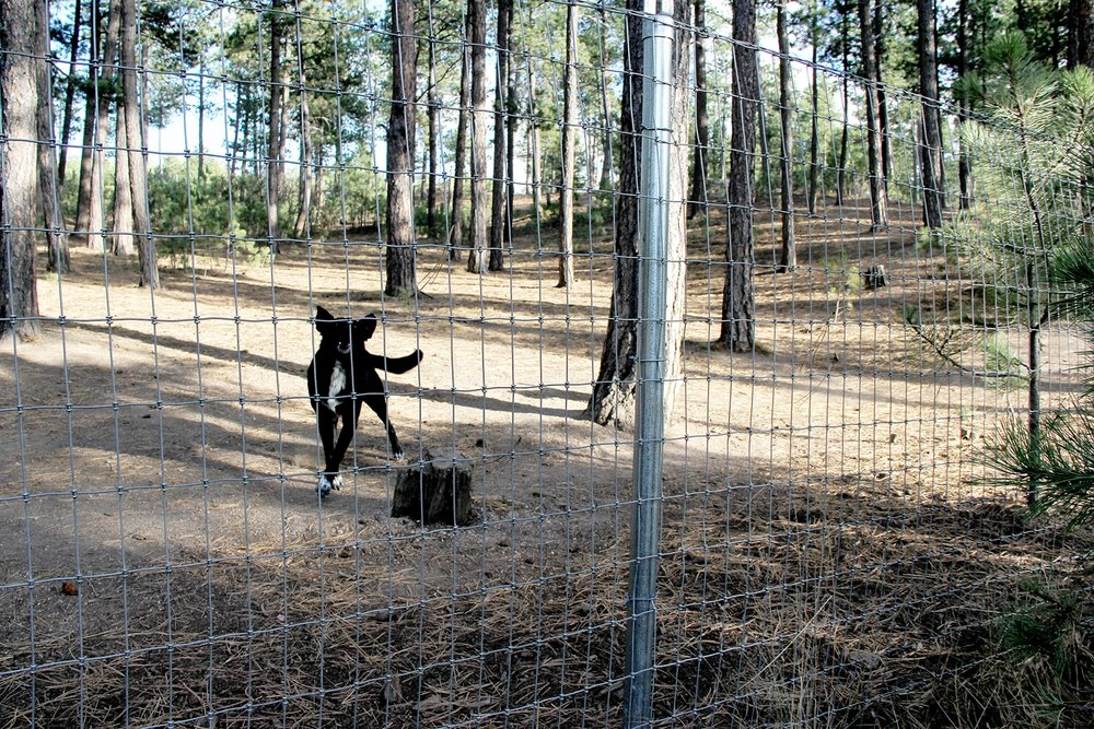 Custom Chain Horse Fencing for Colorado Springs Dog Park