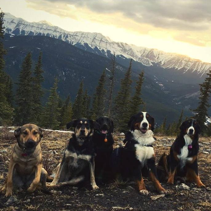 dog+hike.jpg