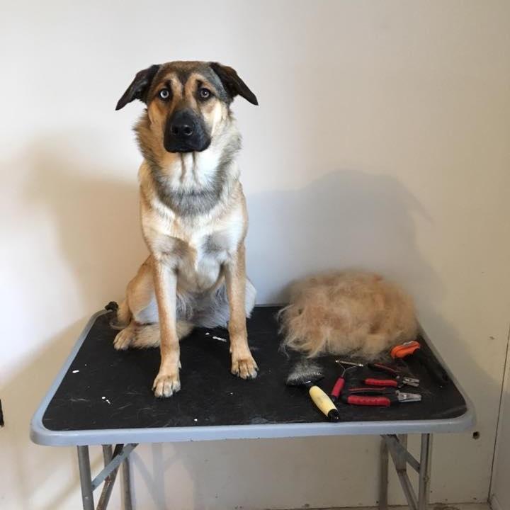in+home+grooming.jpg