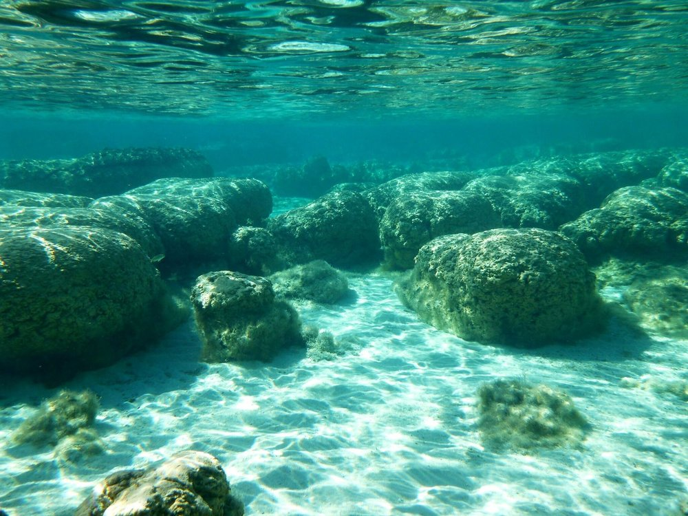 Corals incorporate isotopes from sea water during growth, which can later be used to infer sea water composition through time.