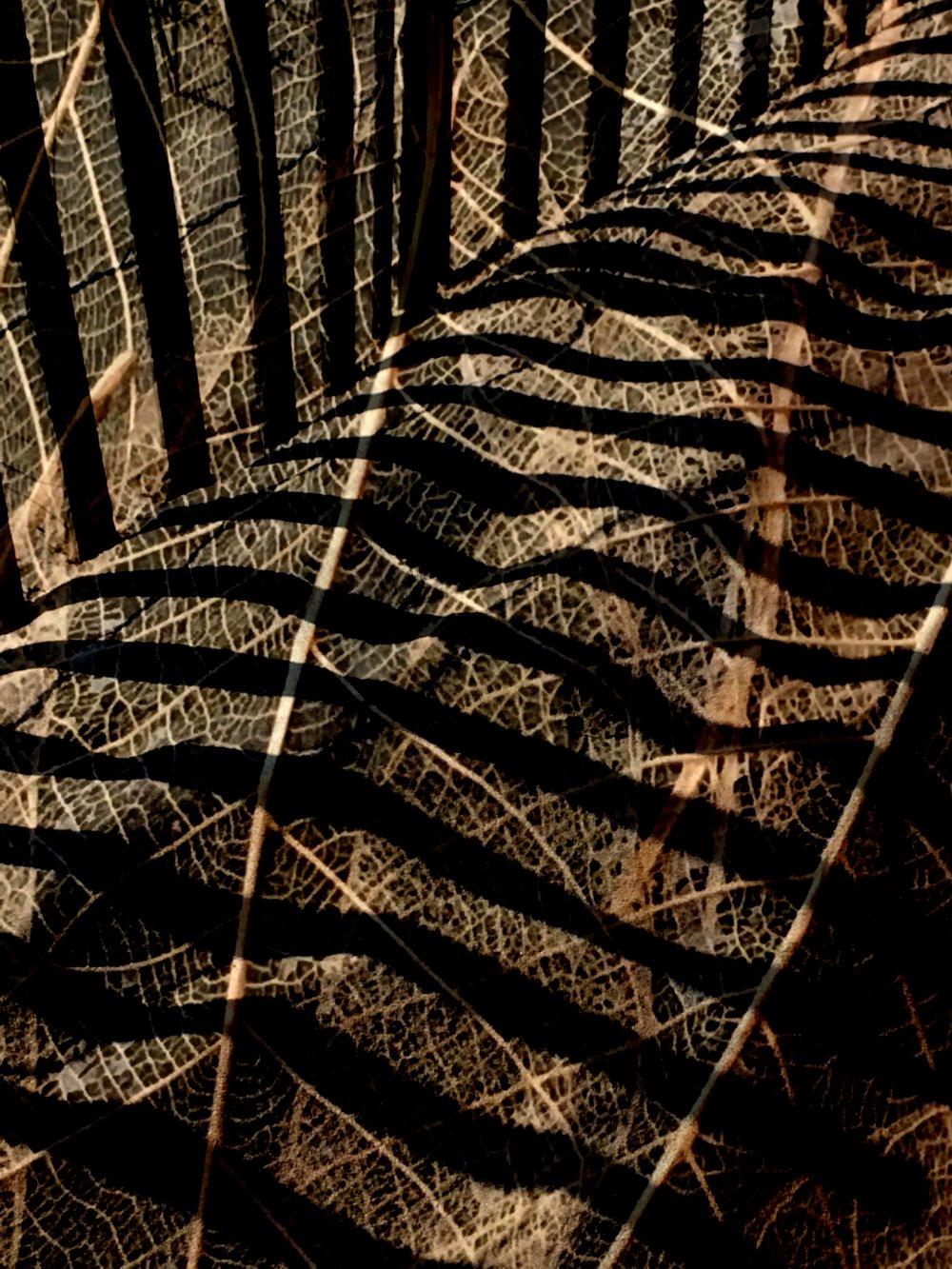 skeleton leaf and dune fencing.jpg