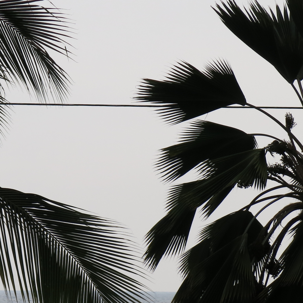 palms and wire 2.png