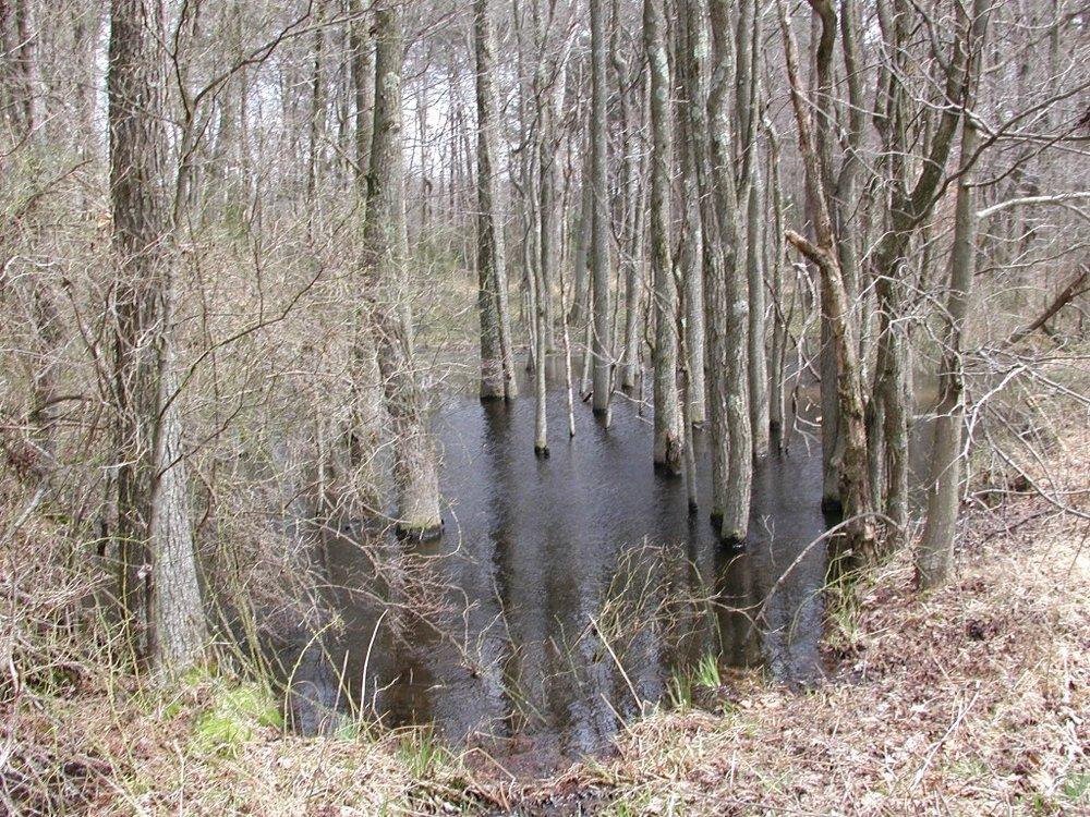 Vernal Pools -
