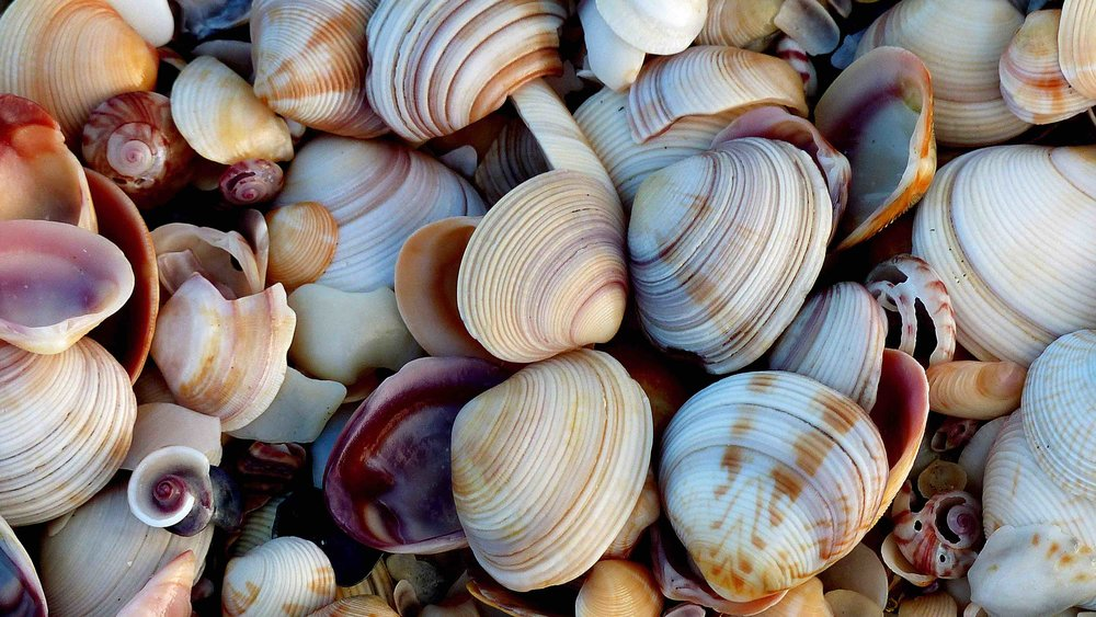 Jeffrey's Bay is also popular for it's shell beaches