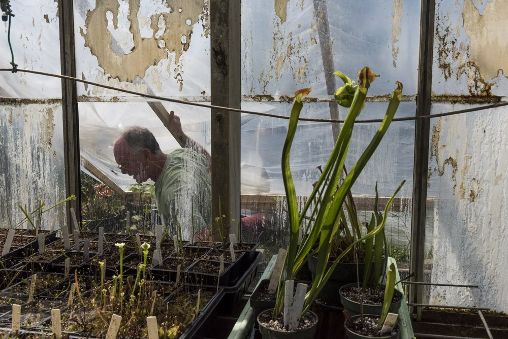 Harold Blazier, Manager of the Ohio Unviersity botanical garden and greenhouse, tends to his carnivous plants on Wednesday, April 5, 2017.