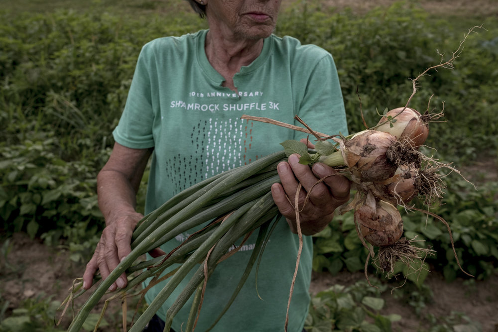 Mary holds up a fresh batch of onions that she had just picked from her garden at home just outside of Cynthiana, Kentucky.