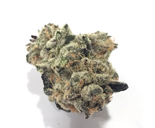 This is our beautiful Stiletto!  This Indica dominant hybrid is a brilliant cross of Gelato X Dos Si Dos. The name Stiletto was thought up by one of our senior trimmers and thought it was a great fit !  #sunlightridge #terpenes  #oregongrowers #maryjane #portlandweed #madeinoregon #oregonbud #420 #thc #cannabis #medicalmarijuana #medicalcannabis #weedstagram #weedstagram420 #instahigh #weshouldsmoke #weed  #farmlife #flower #trichromes #terpenes  #cannabiscommunity  #topshelflife #nofilterneeded #weeddaily #weedculture  #pdxcannabis