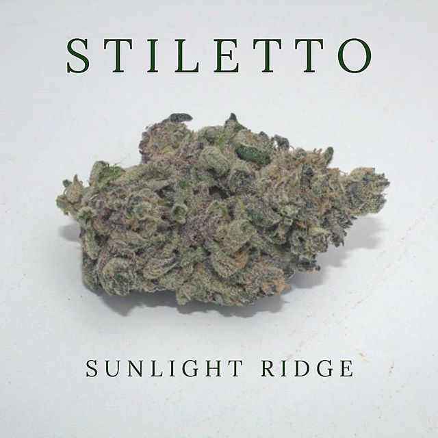 Get To Know our Sweet Stiletto! How we ended up with this amazing strain is a mystery ! Gelato 43 X Dos Si Dos gave one of our senior trimmers the idea to name this Indica dominant hybrid Stiletto.  This strain is perfect for winding down at the end of the day or for a nightcap to promote more peaceful sleep. De-Stress your Mess with Stiletto! Pick some up at your local dispensary!  #sunlightridge #indica #indicadominant #indicadominatehybrid #pdxweed #pdxcannabis #oregoncannabis #portlandcannabis #cannabiscommunity #cannabisconnoisseur