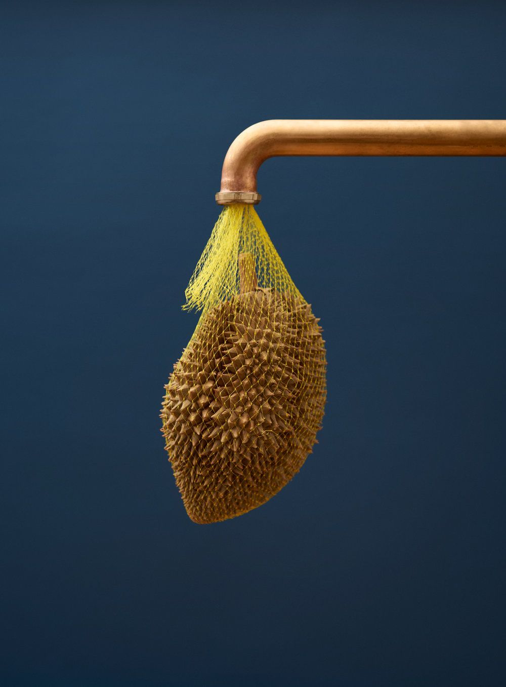 Copper-Pipe-Durian-Still-Life-Sentence.jpg
