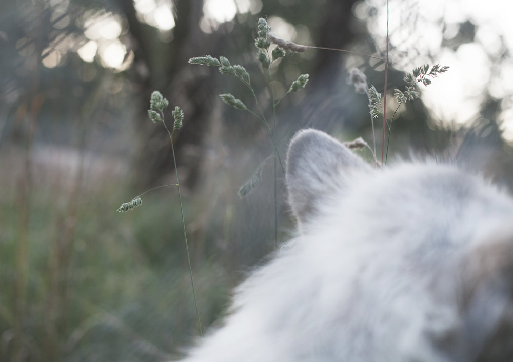 jessie moving through the grass.jpg