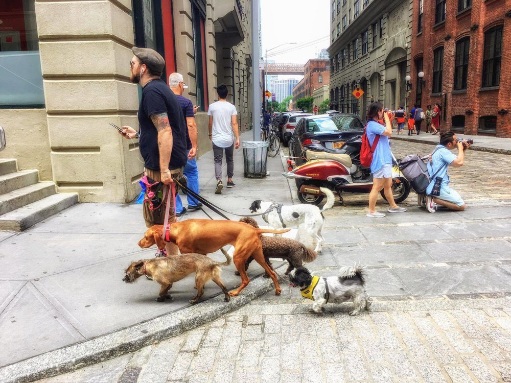 HAPPY DOGS OF DUMBO. PHOTO BY LUCAS COMPAN.