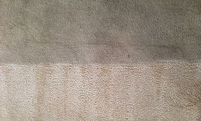 Apartment and Move Out Carpet Cleaning — Pioneer Professional Carpet ...