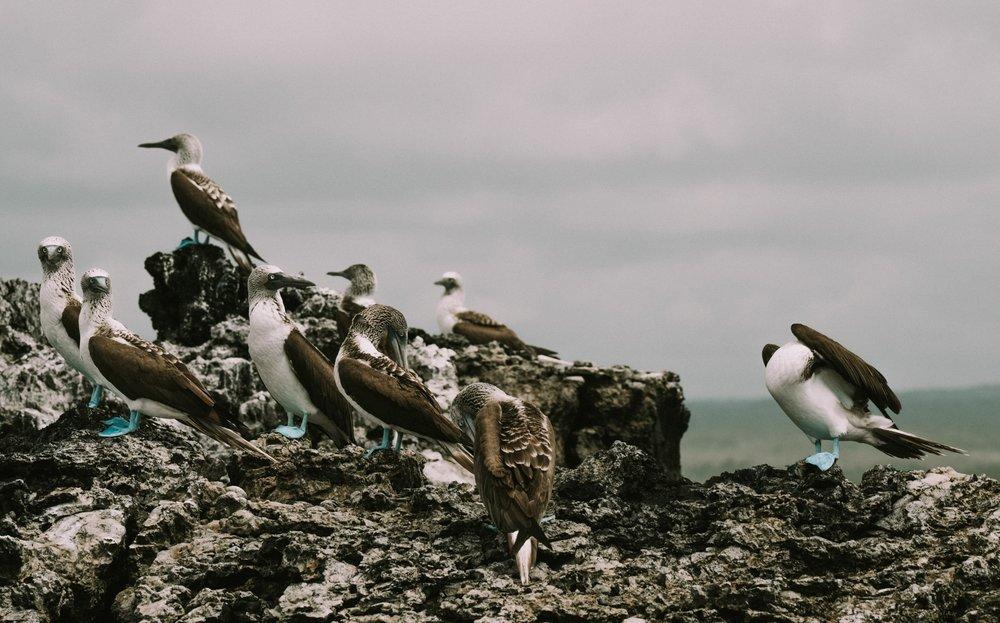 Galapagos Day 5-10-14.jpg
