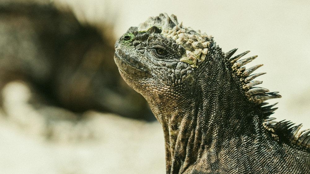 Galapagos Day 5-10-97.jpg