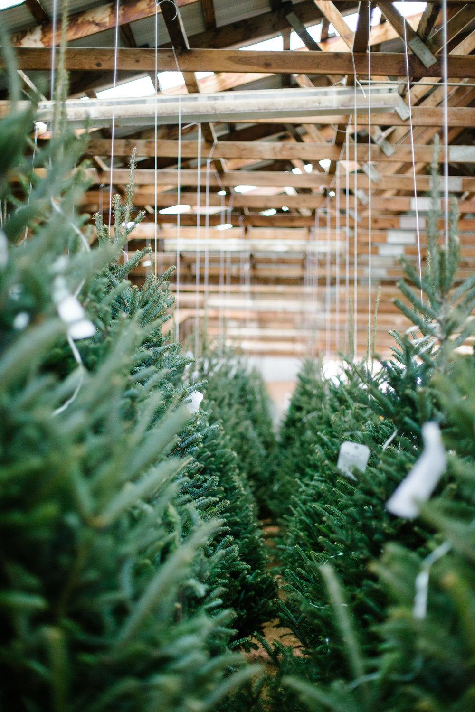 Snowline-Tree-Farm-Christmas-Wreaths-Trees-71.JPG