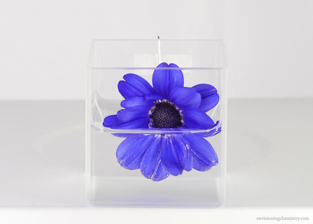 Flowers&Colors_0023.jpg