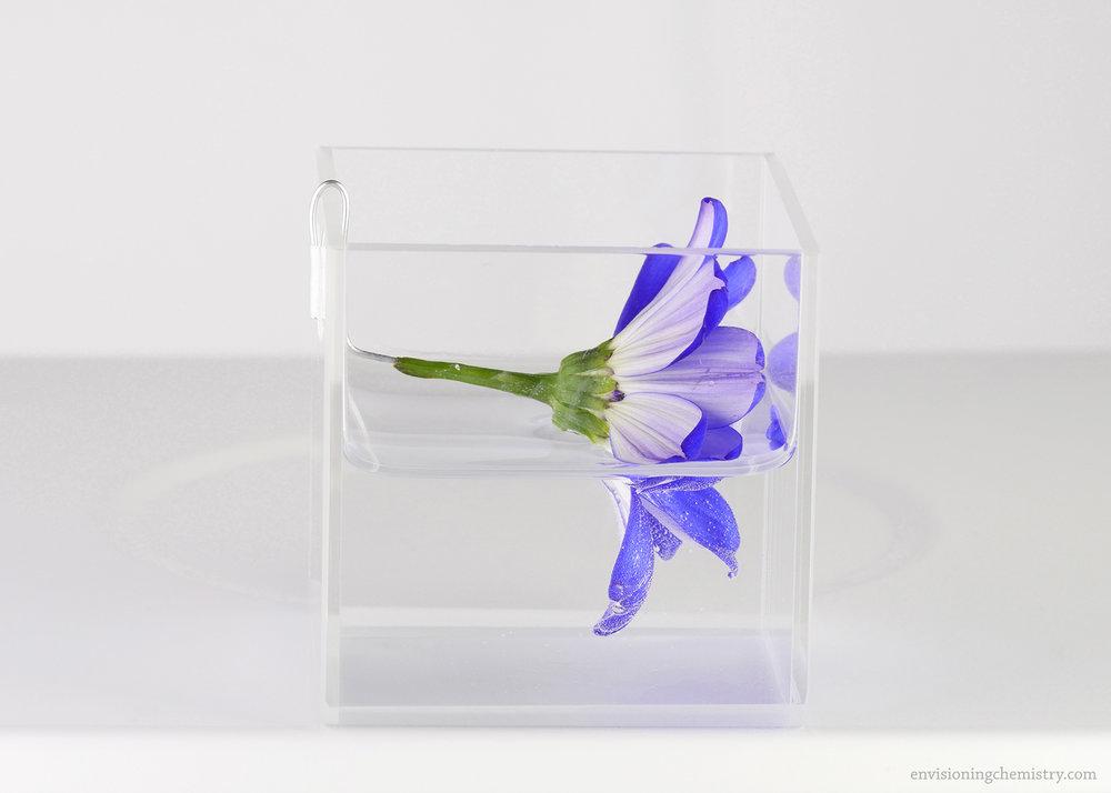 Flowers&Colors_0024.jpg