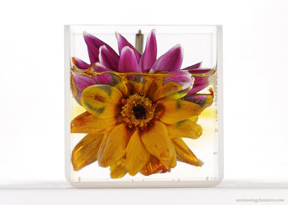 Flowers&Colors_0026.jpg