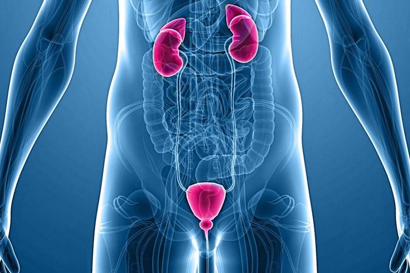 Urologia - Andrologia